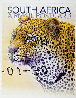 great stamp South Africa RSA postage postcard (Leopard, Panthera pardus, ヒョウ, Pars, Леопард, Luipaard, 豹, Leopardo) poste timbres Afrique du Sud sellos Sudáfrica Postzegel Zuid-Afrika selos África do sul frimerker Sør-Afrika Republika znaczki Południowej
