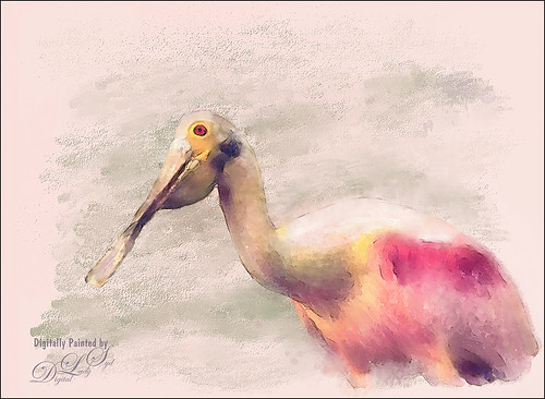Image of a painted Roseate Spoonbill bird