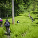 Lush Descent by bundokbiker