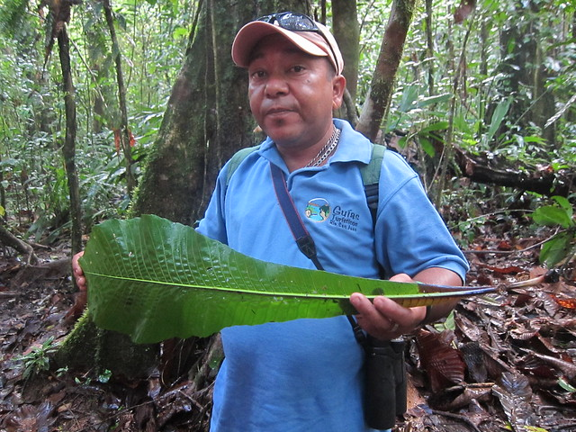 Wilmer, our guide