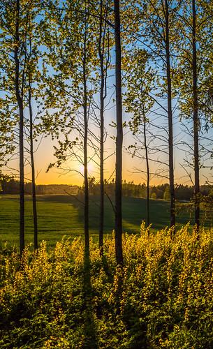 sunset sun tree nature field finland landscape prime sundown vanda puu 15mm kesä auringonlasku aurinko uusimaa pelto