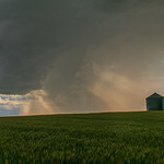 23. Juuli 2016 - 20:33 - A small storm blows through a central Alberta wheat field.
