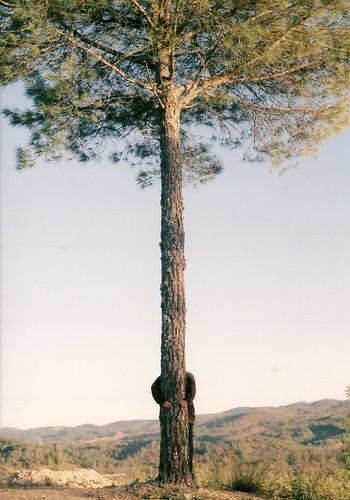 Abrázame - dijo el árbol. Y papá lo hizo. I
