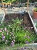Chive garden