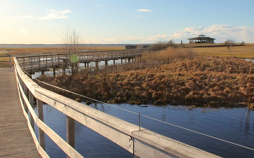 nature sweden natur naturereserve sverige viewpoint utsikten hornborgasjön naturreservat hornborgasjon