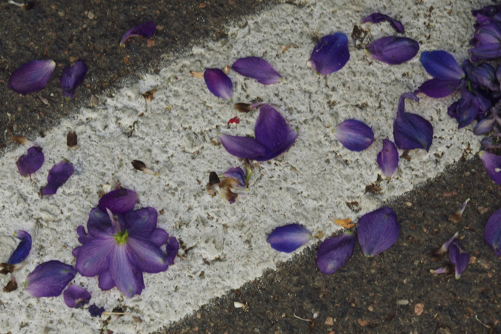 Petals on Sidewalk