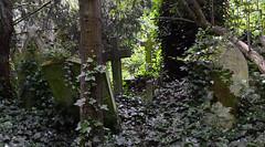 abney park cemetry