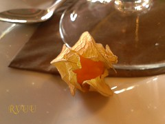 lantern plant [explored]