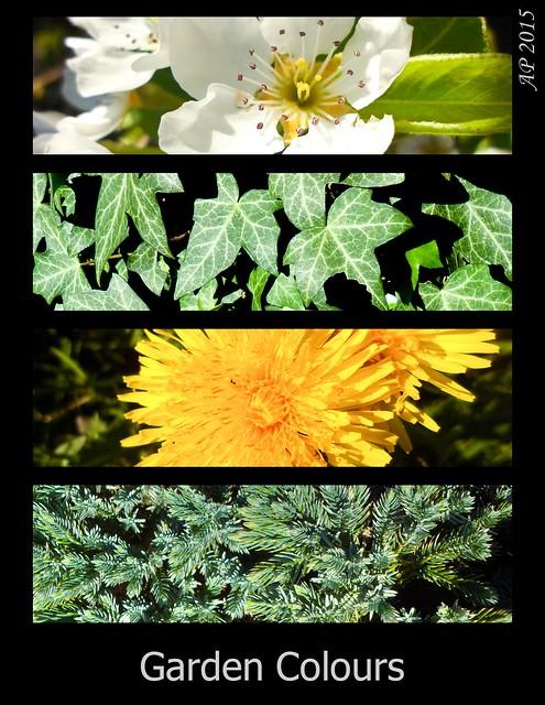 Couleurs du Jardin / Garden Colours