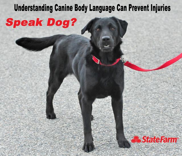 Dog Bite Insurance California