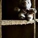'see the halloween bunny' by Steve Pigott