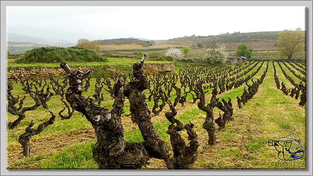 Ruta del Vino en La Rioja Alta (5)