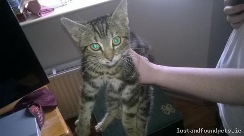[Updated] Thu, Aug 11th, 2016 Found Male Cat - Main Street, Carrickmacross, Monaghan