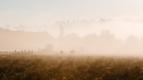 morning horses field fog landscape washington scenery farm foggy pacificnorthwest canon135mmf2lusm canoneos5dmarkiii