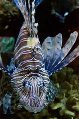 Ripley's Aquarium 76