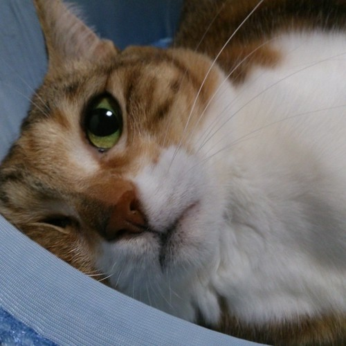 それ、ぜったい変な寝癖つくよ by Chinobu