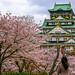 Osaka Castle (大阪城) with Sakura (さくら) Forest by TOTORORO.RORO
