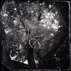 Bicycle tree