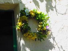 Φωτογραφίες από την φετινή Άνοιξη τον μήνα Μάιο στη Ψίνθο