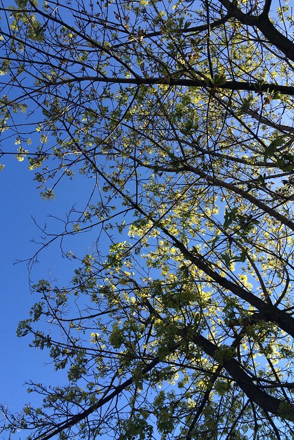 日, 2015-04-26 08:06 - Cold Spring