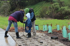 For young and old: Native grass planting, Merri Creek at Fawkner
