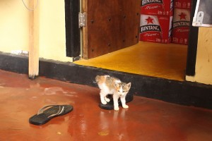 It was a baby kitten season while we were on Gili T!
