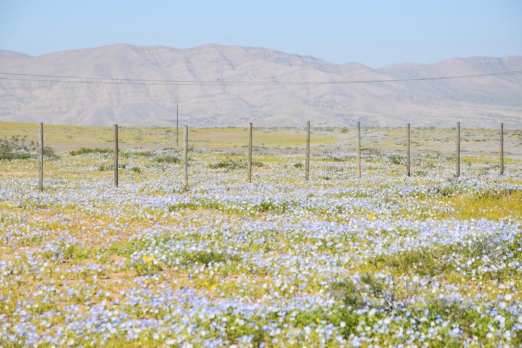 Desierto Florido '15
