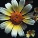 Bloom by Robert Ogilvie
