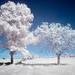 Tree of savior by Peter Daum 69