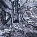 THE TREE by hobbitcamera