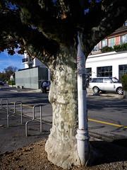 Tree pole, Nyon