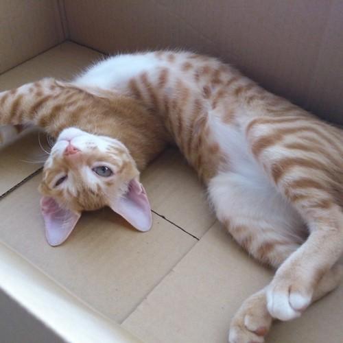 生後4ヶ月のトロワ。相手をするのが楽だった頃 by Chinobu