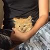 Kittens and yoga! #catsnmats #arliowa #fluffy