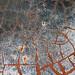Burscough, West Lancs by gotts_paul