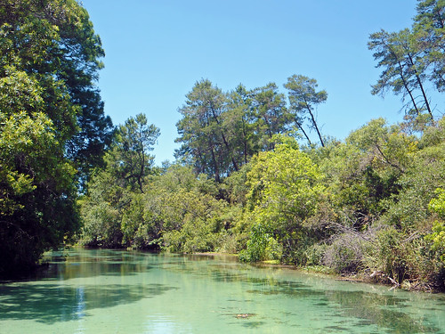 river stream water riverbank trees brush weekiwachee florida