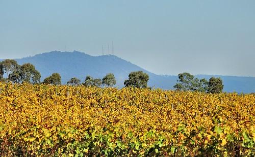 autumn vineyard nikon australia victoria winery yarravalley vic mtdandenong grapevines yering mountdandenong dandenongranges yarraglen yeringstation p600 thedandenongs chateauyering nikoncoolpixp600 phunnyfotos