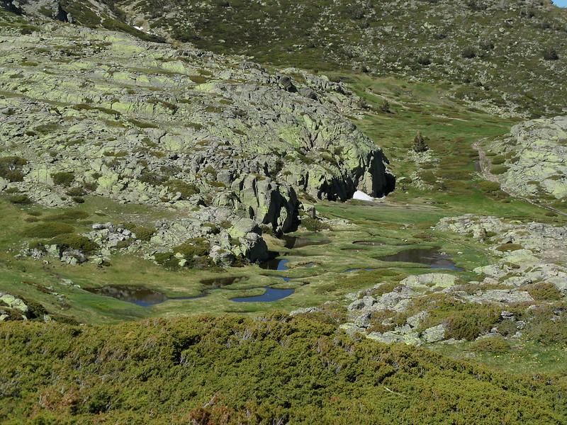 Peñalara. Alpino. Artrópodos, anfibios y reptiles 17555618560_da5b7c71bd_c