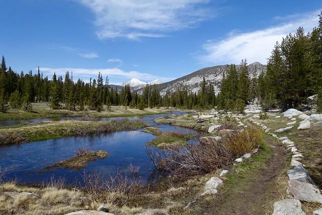 Meadow near Rose Lake Trail junction, m867