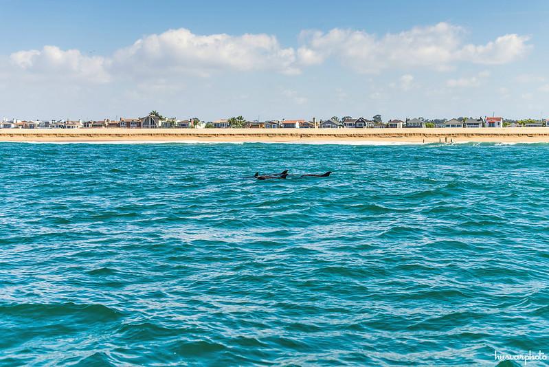whale watching newport beach california
