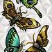 Lepidópteras by carola sandoval