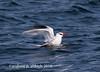 Andrew Aldrich has added a photo to the pool:2016 bird photoebird.org/ebird/view/checklist/S30665351