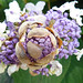 Purple Hydrangea flower buds within a larger bud by Monceau