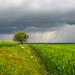 Spring rains by drstar.