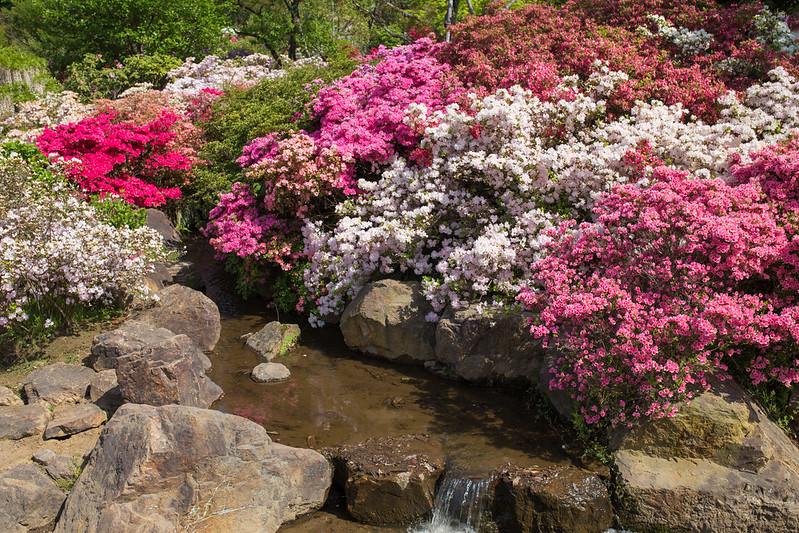 ashikaga_flowerpark-26
