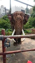 an awesome elephant