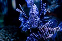 Aquarium of the Smokies-69