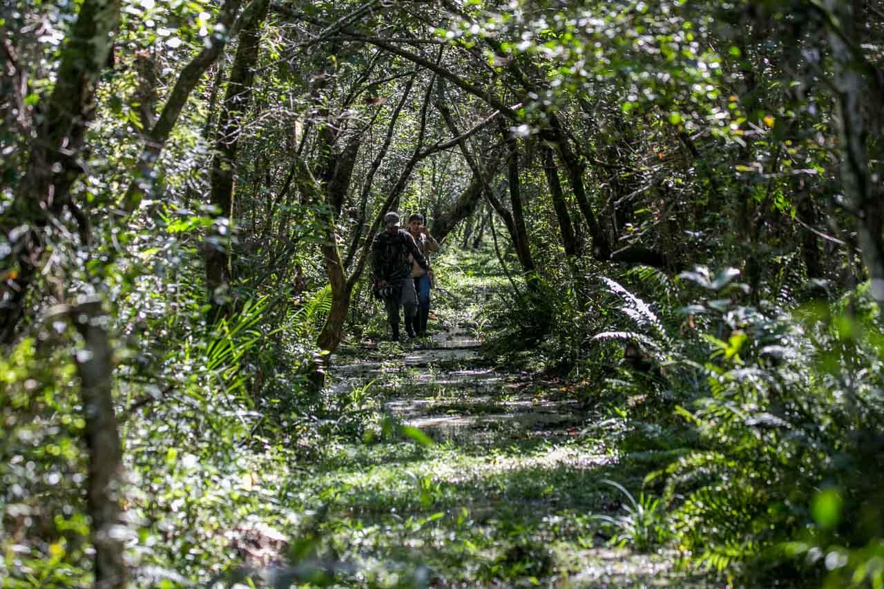 Uno de los senderos de aproximadamente 5 kilómetros, lleva hasta un mirador sobre la copa de un árbol. (Tetsu Espósito)