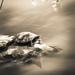 Turtle by Sanne's pics