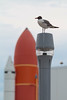 Bird and Space Shuttle