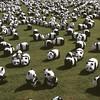 #panda #exhibition #cityhall #seoul